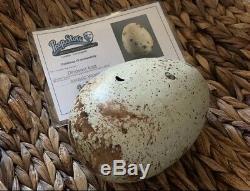 Jurassic World Screen Used Egg! Comes With COA