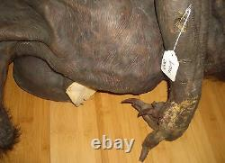 Screen used Underworld dead Lycan prop killed by Kate Beckinsale with COA Raze